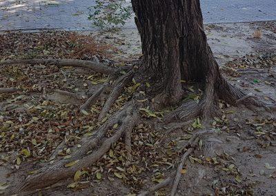 echando raíces